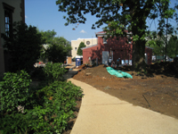 Grounds--Plantings on north side looking west - July 9, 2011