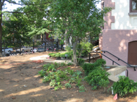 Grounds--Plantings on south east corner of the building - July 9, 2011