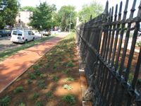 Grounds--Plantings along E Street SE looking west outside the fence - July 9, 2011